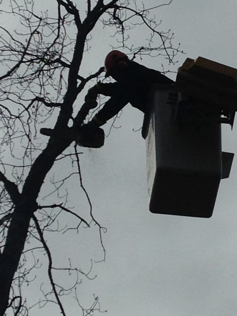 Bucket Truck - Tree Removal